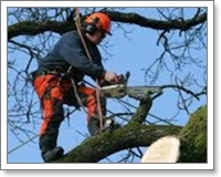 tree surgeon leamingtonspa and warwickshire